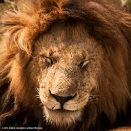 Kenya Part 1: Nairobi & Maasai Mara