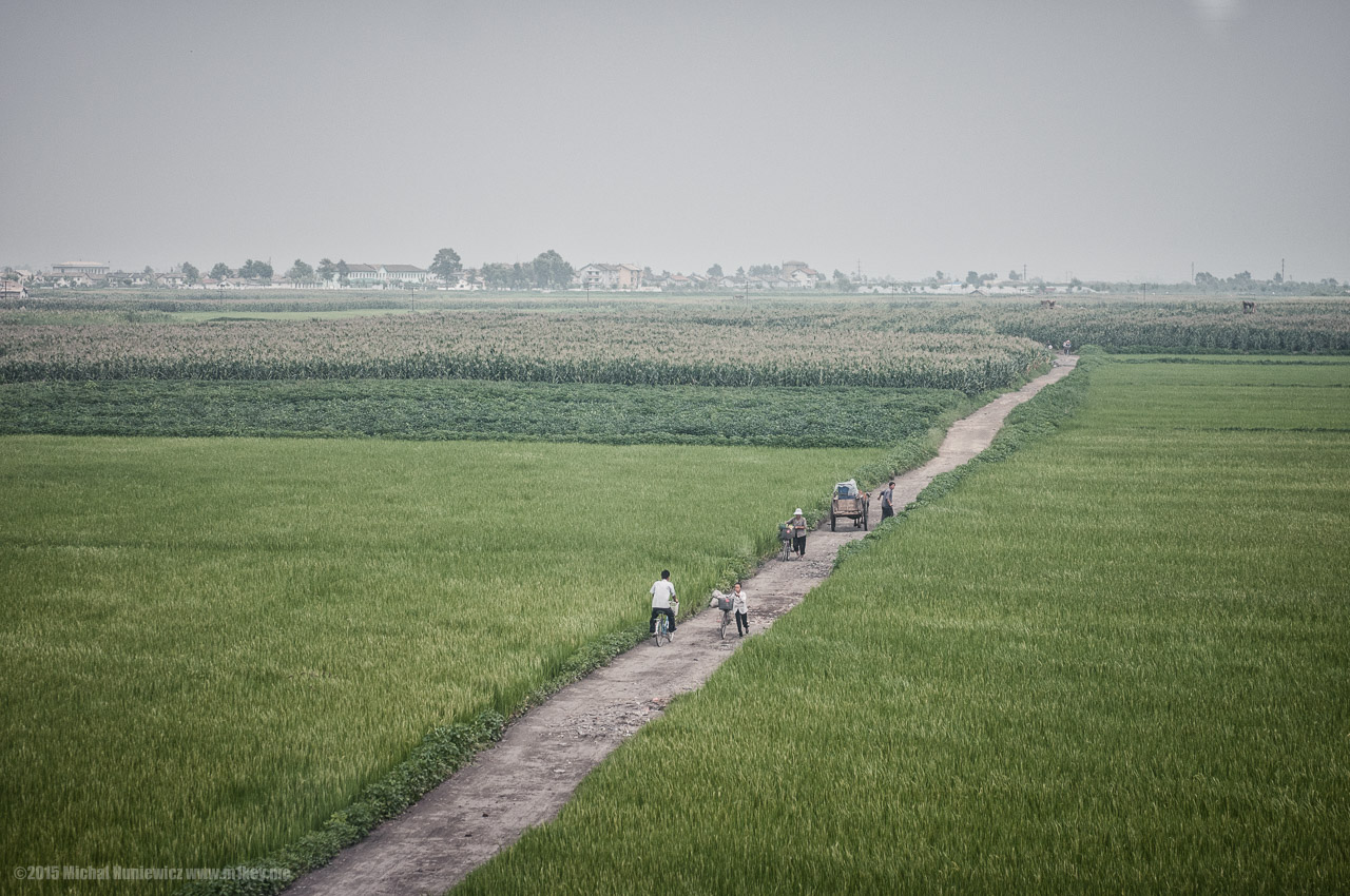 Fields of North Korea